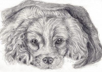 hundetegning2-7