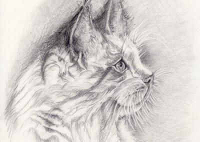 kattetegning-1-7